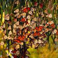 Butterflies by Marc Bittan