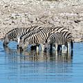 Etosha - Namibia by Joana Kruse