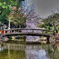 Nara Japan by Paul James Bannerman