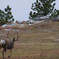 10 Point Buck Heads West by Jeff Birr