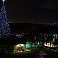 100 Foot Christmas Tree by Lawrence S Richardson Jr