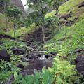100181 Awaawapuhi Creek Na Pali Coast by Ed Cooper Photography