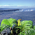 100960 Ferns And Halemaumau Crater Kilauea Caldera Hi by Ed Cooper Photography