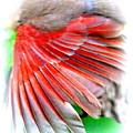 1055-001 - Northern Cardinal by Travis Truelove