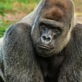 10898 Gorilla by Pamela Williams
