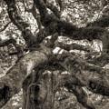 Angel Oak Live Oak Tree by Dustin K Ryan
