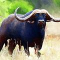Buffalo by Anna J Davis