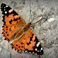 Butterfly by FL collection