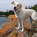 Betsy On Horseshoe Bay Island by Sandra Updyke