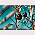 Olives by Melinda Sullivan Image and Design