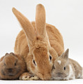 Rabbits by Mark Taylor