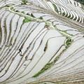 Terrace Fields Scenery In Spring by Carl Ning
