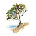 #11 Tree by Amy Kirkpatrick