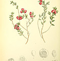 Illustrations Of The Flowering Plants And Ferns Of The Falkland Islands by MotionAge Designs