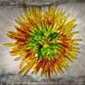 11262 Flower Abstract Series 02 #16a by Colin Hunt