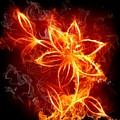 112775 Flowers Fire by Mery Moon