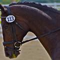113 Guiness by Sherri Cavalier