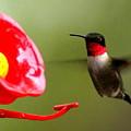 1164 - Hummingbird by Travis Truelove