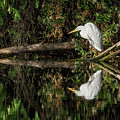 $150 - 11x14 Canvas -great Egret 5525-040918-1 by Tam Ryan