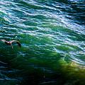 Ca Bird by Angus Hooper Iii