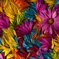 Daisy Petals Abstracts by Jim Corwin