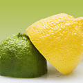 12 Organic Lemon And 12 Lime by Marlene Ford