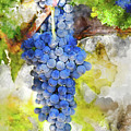 Red Grapes On The Vine by Brandon Bourdages