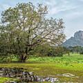 Sigiriya - Sri Lanka by Joana Kruse