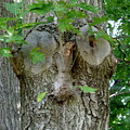 Trees I Love 13 One Who Watches by Anna Folkartanna Maciejewska-Dyba