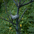 Wellfield Gardens by Craig Hosterman