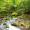 1266 Great Smoky Mountain National Park by Steve Sturgill