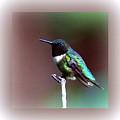 1281 - Hummingbird by Travis Truelove