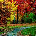 Autumn Colors by Aron Chervin