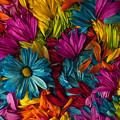 Daisy Petals Abstracts by Jim Corwin