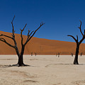 Dead Vlei by Davide Guidolin