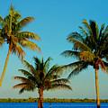 13- Palms In Paradise by Joseph Keane