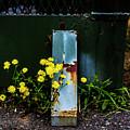 Summer Rams by Angus Hooper Iii