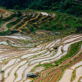 Longji Terraced Fields Scenery by Carl Ning