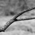 Bare Tree Branches In Early Spring by Donald Erickson