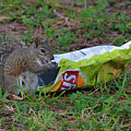 14- Chip Lovin' Squirrel by Joseph Keane
