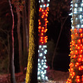 Christmas Season Decorations And Lights At Gardens by Alex Grichenko