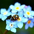 14 Spot Ladybird by Adrian Cooch