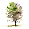 #14 Tree by Amy Kirkpatrick