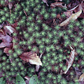 146208 Moss On Forest Floor by Ed Cooper Photography