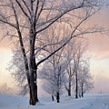 Amazing Landscape With Frozen Snow Covered Trees At Sunrise   by Oleg Yermolov