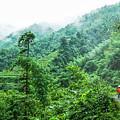 Mountain Scenery In Mist by Carl Ning