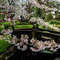 Tokyo Japan by Paul James Bannerman