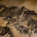 Chauvet by Arterra Picture Library