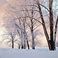 Amazing Landscape With Frozen Snow Covered Trees At Sunrise   by Oleg Yermolov