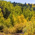 Crystal Creek Autumn by Steve Krull